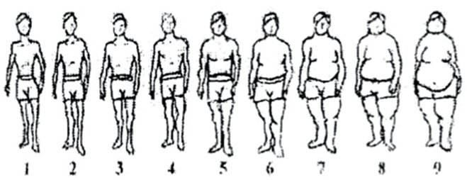 Image for Stunkard Adult Male Image. Adapted from Stunkard, A. J., Sorensen, T., & Schulsinger, F. (1983). Association for Research in Nervous and Mental Disease, 60, 115-120.