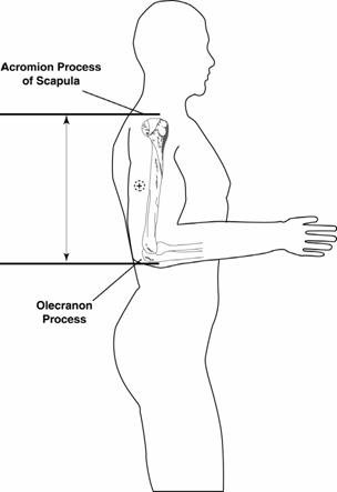Image for Participant position for upper arm length and midpoint